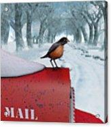 Snow Bird Acrylic Print