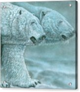 Snow Blind Acrylic Print