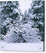 Snow Burdened Tree In The Flatirons Acrylic Print