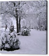 Snow Bush Acrylic Print