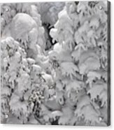 Snow Coat Acrylic Print