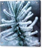Snow Cover Pine Acrylic Print