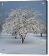 Snow-covered Apple Tree Acrylic Print by Erica Carlson