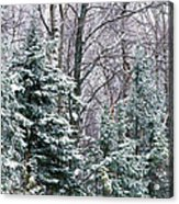Snow-covered Forest, Wisconsin, Usa Acrylic Print