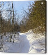 Snow Covered Pathway Acrylic Print by Richard Mitchell