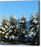 Snow Covered Trees Acrylic Print