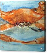 Snow Crab Is Ready Acrylic Print