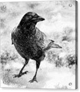 To Know A Crow Acrylic Print