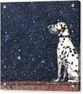 Snow Dog Acrylic Print