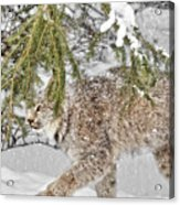 Snow Fall Acrylic Print