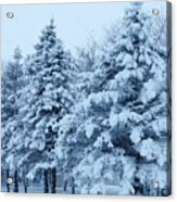 Snow Flocked Pines Acrylic Print