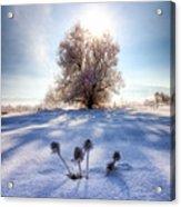 Snow Flowers Acrylic Print