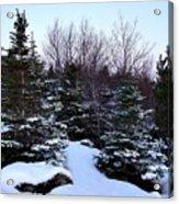 Snow For Christmas Acrylic Print