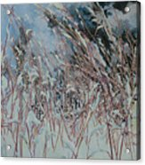 Snow Grass Happiness Acrylic Print