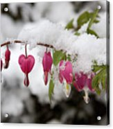 Snow Heart Acrylic Print by Terry Walters