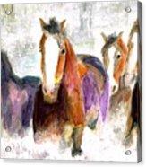 Snow Horses Acrylic Print