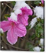 Snow In Houston Acrylic Print