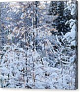 Snow In The Forest Acrylic Print