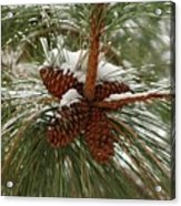 Snow In The Pine Acrylic Print