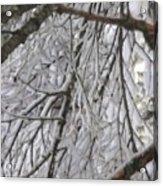 Snow In Yosemite Acrylic Print