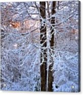 Snow Maple Morning Acrylic Print