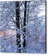 Snow Maple Morning Landscape Acrylic Print