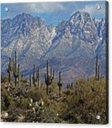 Snow On Four Peaks Arizona No Snow On Saguaros Acrylic Print