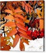 Snow On Scarlet Magick Acrylic Print