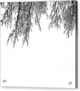Snow On The Branches Two  Acrylic Print