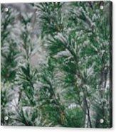 Snow On The Pine Acrylic Print