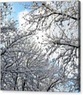 Snow On Trees Acrylic Print