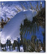 Snow Ornament - Joshua Tree Acrylic Print