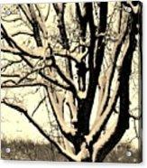Snow Sitting On Top The Tree Acrylic Print