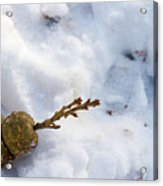 Snow Sprouts Acrylic Print
