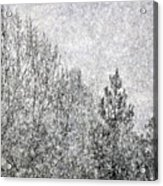 Snow Squawl Acrylic Print by Laura Mountainspring