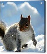 Snow Squirrel Acrylic Print
