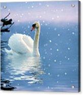 Snow Swan Swim Acrylic Print