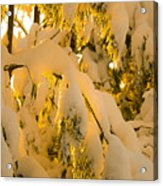 Snow The Day After Acrylic Print