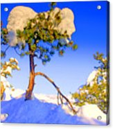 Snow Tree Acrylic Print