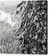 Snow, Trees, Yellowstone Acrylic Print