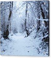 Snow Walk Acrylic Print