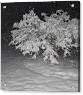 Snow White Tree Acrylic Print