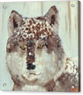 Snow Wolf Acrylic Print