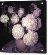 Snowball Bouquet Acrylic Print