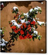 Snowberries Acrylic Print