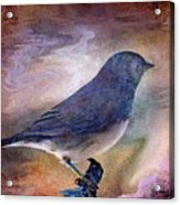 Snowbird Stories... Acrylic Print