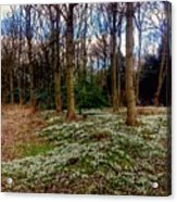 Snowdrop Woods 2 Acrylic Print