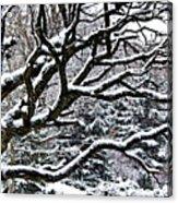 Snowfall And Tree Acrylic Print