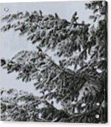 Snowfall Acrylic Print