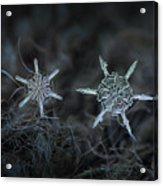 Snowflake Photo - When Winters Meets Acrylic Print by Alexey Kljatov
